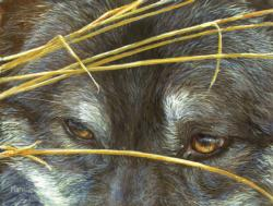 Wolf Eyes and Reeds - Scratch and Dent Wolves Jigsaw Puzzle