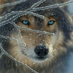 Fire Within Ice Wolves Jigsaw Puzzle