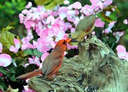 Cardinal Pair Birds Wooden Jigsaw Puzzle