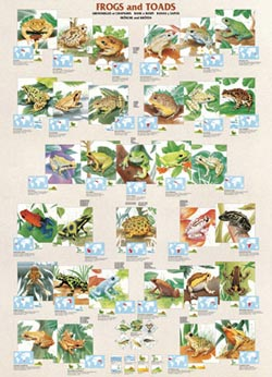 Frogs and Toads Reptiles / Amphibians Jigsaw Puzzle