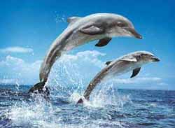 Dolphin Under The Sea Jigsaw Puzzle