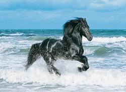 Black Horse Horses Jigsaw Puzzle