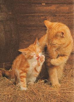 Ginger Cats Animals Cork Puzzle