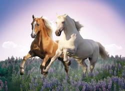 Free Horses Horses Jigsaw Puzzle