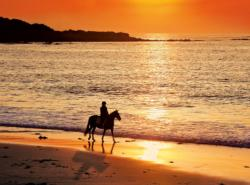 Walk At Sunset  Sunrise/Sunset Jigsaw Puzzle