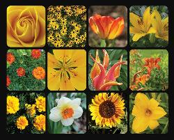 Golden Blooms Collage Jigsaw Puzzle