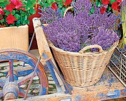 Basket of Lavender Garden New Product - Old Stock
