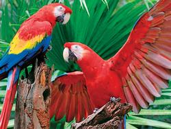 Scarlet Macaw Birds Children's Puzzles