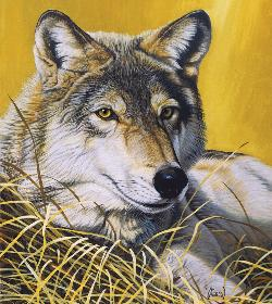 Yellow Eyes Wolves Jigsaw Puzzle