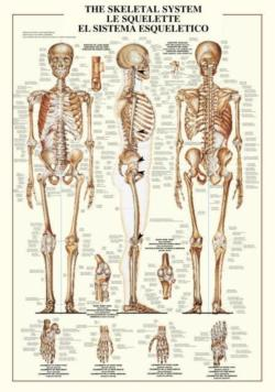 The Skeletal  System Science
