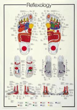 Reflexology Science