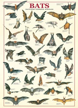 Bats Animals Jigsaw Puzzle