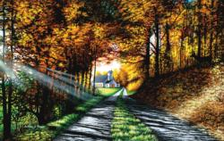 Choose Your Path Wisely Countryside Jigsaw Puzzle