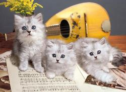 Musician Cats Baby Animals Jigsaw Puzzle