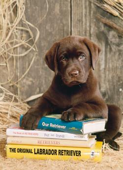 Laying on the Books Dogs Jigsaw Puzzle
