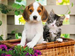 The Dog and The Cat Baby Animals Jigsaw Puzzle