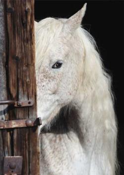 Equine Beauty Horses Jigsaw Puzzle