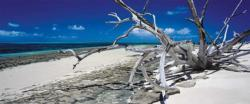 Green Island, Queensland Australia Beach Panoramic Puzzle