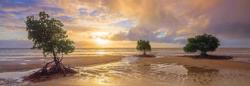 Cape Tribulation, Daintree National park Australia Panoramic Puzzle