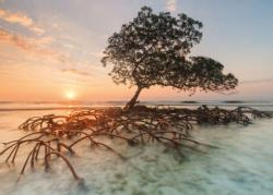 Red Mangrove Nature Jigsaw Puzzle