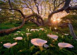 Calla Clearing Photography Jigsaw Puzzle