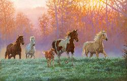 Morning Sun Fields Jigsaw Puzzle