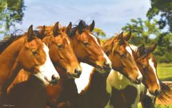 Lineup Horses Jigsaw Puzzle