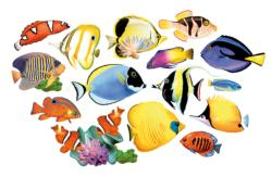 Reef Fish I Pattern / Assortment Shaped