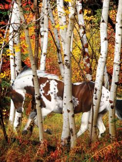 Hideaway Horse (Heavenly Horses) Forest Large Piece