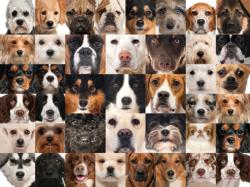 41 Dogs Collage Jigsaw Puzzle