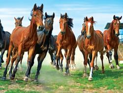 Wild Run Horses Jigsaw Puzzle