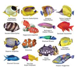 Reef Fish II (Multi-Shaped Puzzles) Collage Jigsaw Puzzle