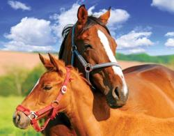 Mare and Foal Horses Jigsaw Puzzle