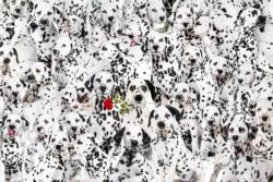 Cra-Z Lots of Spots Dogs Impossible Puzzle