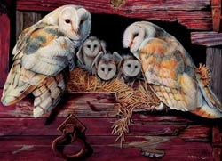 Barn Owls Birds Jigsaw Puzzle
