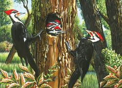 Pileated Woodpeckers Birds Jigsaw Puzzle