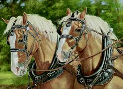 Buck and Babe Horses Jigsaw Puzzle
