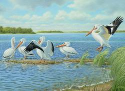Pelicans Birds Jigsaw Puzzle