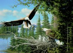 Nesting Eagles Lakes / Rivers / Streams Jigsaw Puzzle