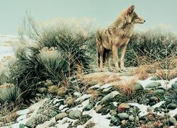 Coyote in Winter Sage Winter Jigsaw Puzzle