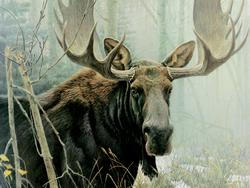 Bull Moose - Scratch and Dent Forest Jigsaw Puzzle