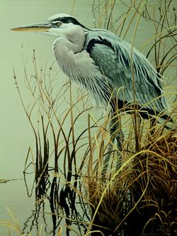 Great Blue Heron Wildlife Jigsaw Puzzle