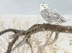 Fallen Willow Snowy Owl Winter Jigsaw Puzzle