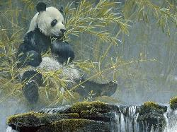 Giant Panda Wildlife Jigsaw Puzzle