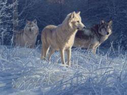 White Gold Wolves Wildlife Jigsaw Puzzle