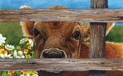 Brown Eyed Girl Cows Jigsaw Puzzle
