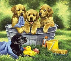 Squeaky Clean Dogs Jigsaw Puzzle