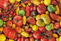Tomatoes Pattern / Assortment Jigsaw Puzzle