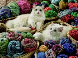 Ragdolls Cats Large Piece