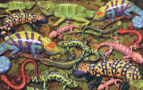 Salamanders Reptiles and Amphibians Jigsaw Puzzle
